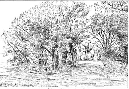 Ártéri erdő - Rajzok