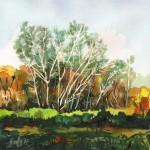Ártéri erdő - Akvarell